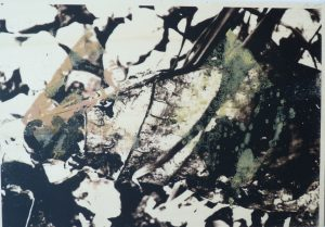 Ebenenverschmelzung, ways of color, plantcolor, screenprint and transferprint on wooden panel, Din. A4
